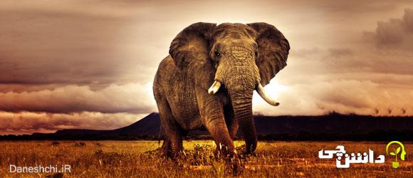 زندگی فیل ها