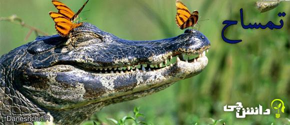 تمساح (Crocodile)