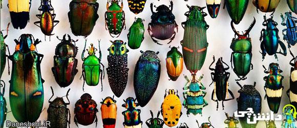 حشرات (Insects)