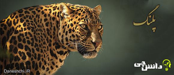 پلنگ ( Leopard)