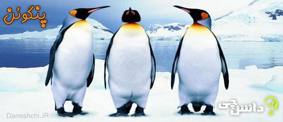 پنگوئن (Penguin)
