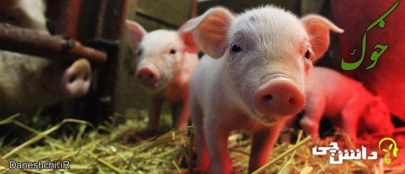 خوک (Pig)