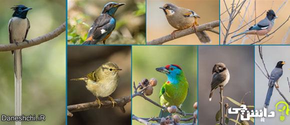 پرندگان (birds)