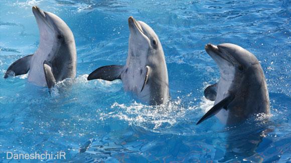 زندگی دلفین