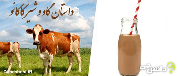 داستان گاوی که شیر کاکائو می داد