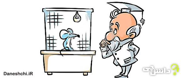 انشا طنز و غیر طنز درد دل یک موش آزمایشگاهی