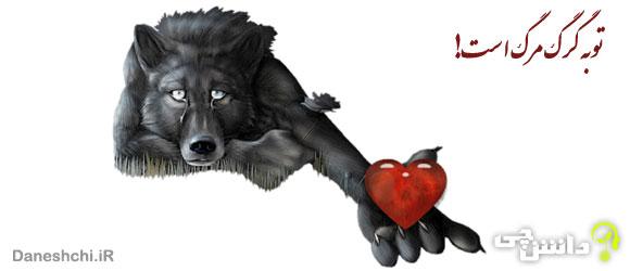 معنی ضرب المثل توبه گرگ مرگ است