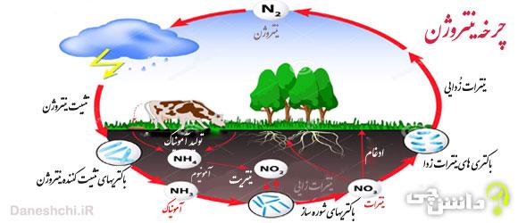 چرخه نیتروژن و نقش آن در زندگی