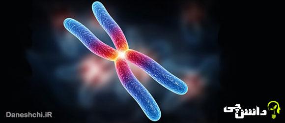 تحقیق در مورد کروموزوم