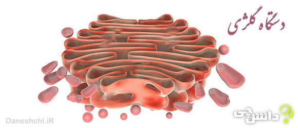 تحقیق در مورد دستگاه گلژی