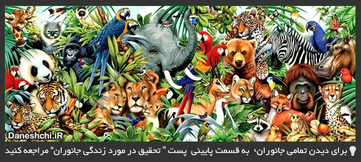 جانوران - Animals