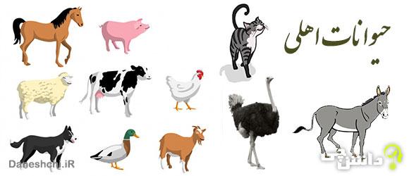 تحقیق در مورد حیوانات اهلی