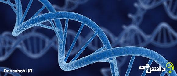 تحقیق در مورد ژن