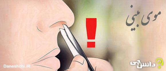تحقیق در مورد موی بینی