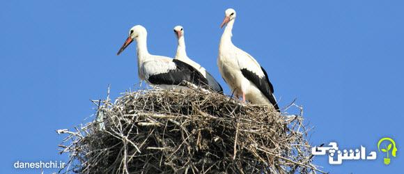 عکس آشیانه سازی (لانه سازی) پرندگان