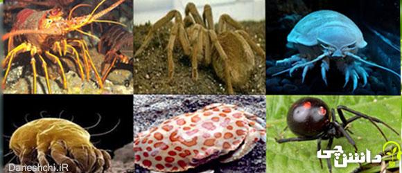 بندپایان (Arthropoda)