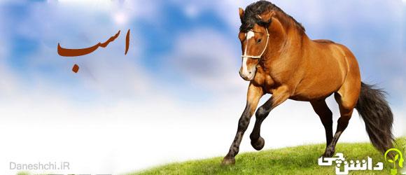 اسب , زندگی اسب ها