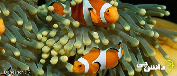 همه چیز درمورد ماهی ها