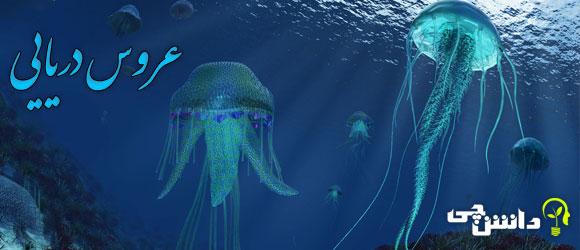 عروس دریایی (Jellyfish)
