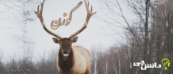 گوزن(deer) , زندگی گوزن ها