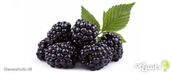 میوه تمشک (Blackberry)
