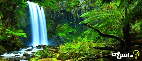 عجایب و شگفتی های جنگل آمازون