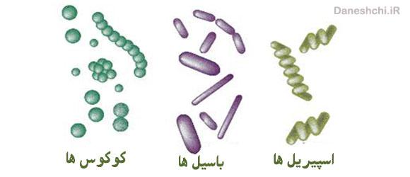 انواع باکتری ها از نظر شکل