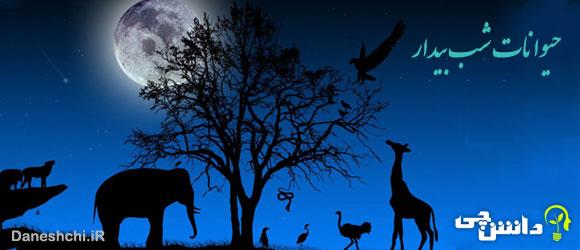 تحقیق در مورد حیوانات شب رو یا شب بیدار
