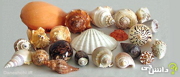 تحقیق در مورد صدف ها و کاربرد آنها