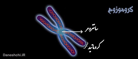 ساختار کروموزوم