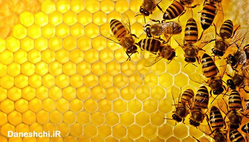 جمعیت زنبور عسل