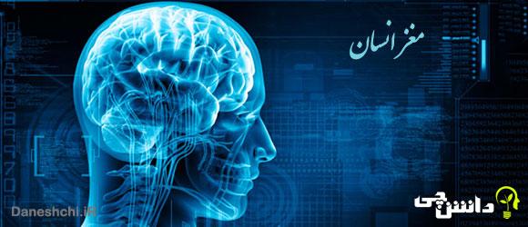 تحقیق در مورد مغز انسان