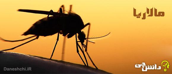تحقیق در مورد بیماری مالاریا و انواع آن