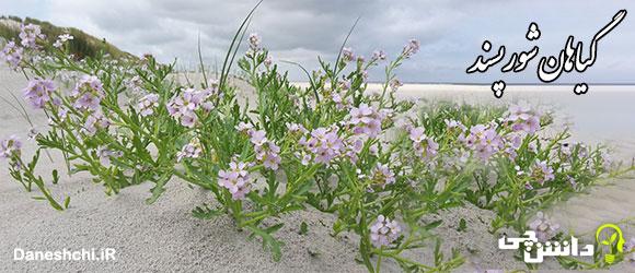 چه گیاهانی می توانند در آب نسباً شور رشد کنند؟ - گیاهان شورپسند