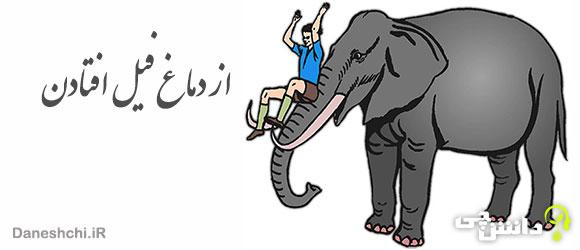 ضرب المثل از دماغ فیل افتادن