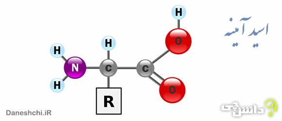 تحقیق در مورد اسید آمینه